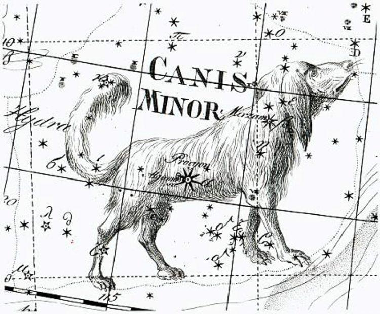Созвездия большой пес картинки